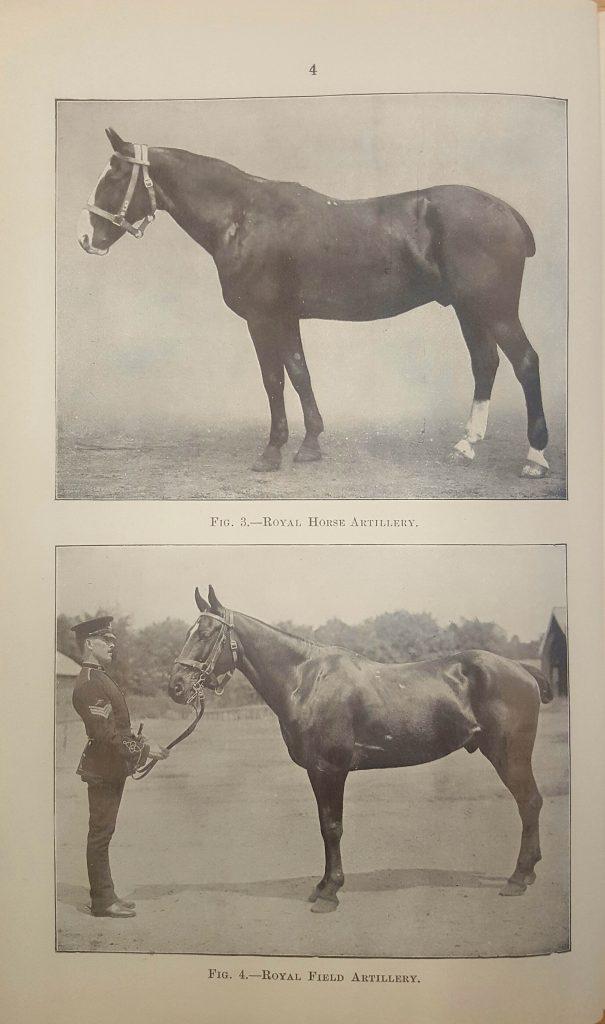 horse-image-1