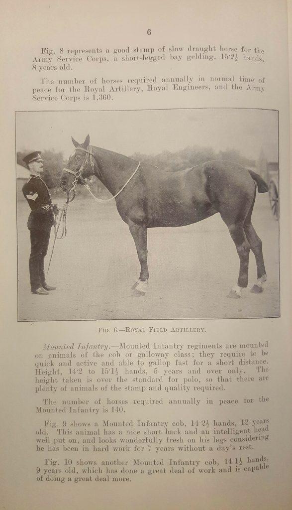 horse-image-2
